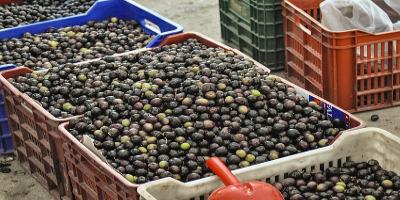PEZA Union - neue Olivenöle bei CretanOil